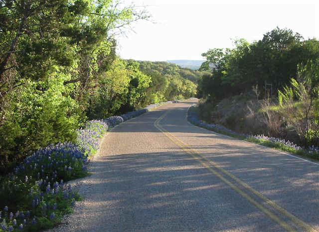 from_Tom_-_Pecan_Drive_spring_2010