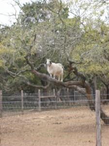 sophie in tree